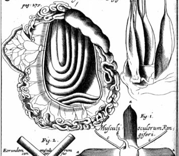 Dissections by the Royal Anatomist
